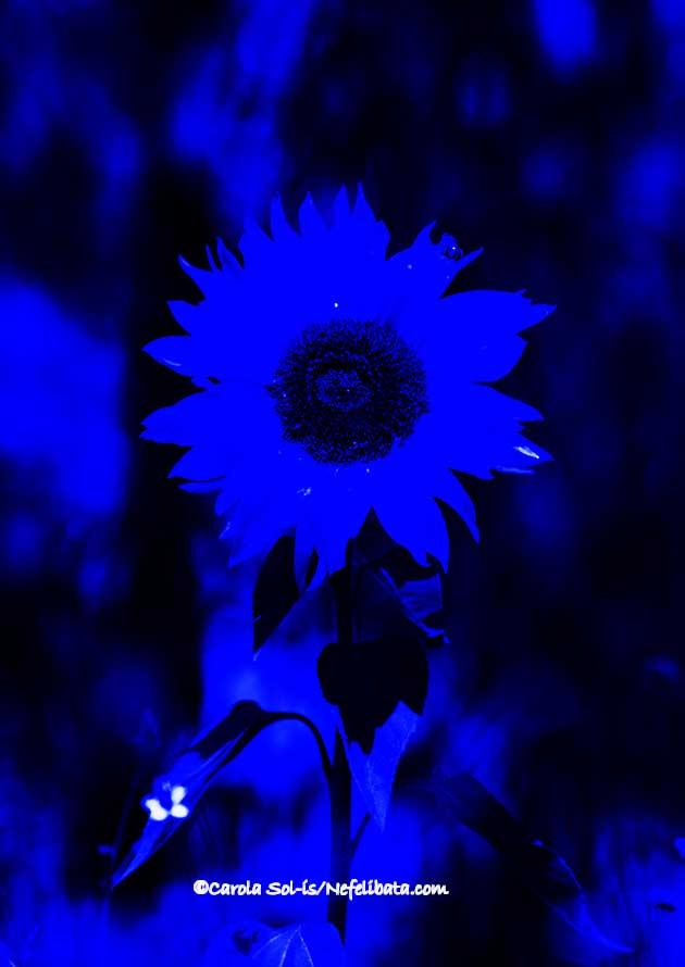 Blue inspiration. Nefelibata.com.jpg
