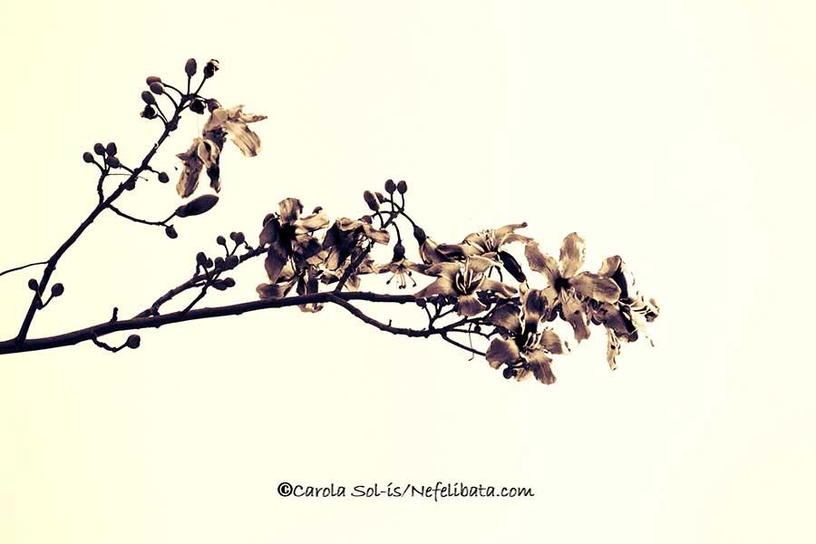 Nefelibata Vintage flower